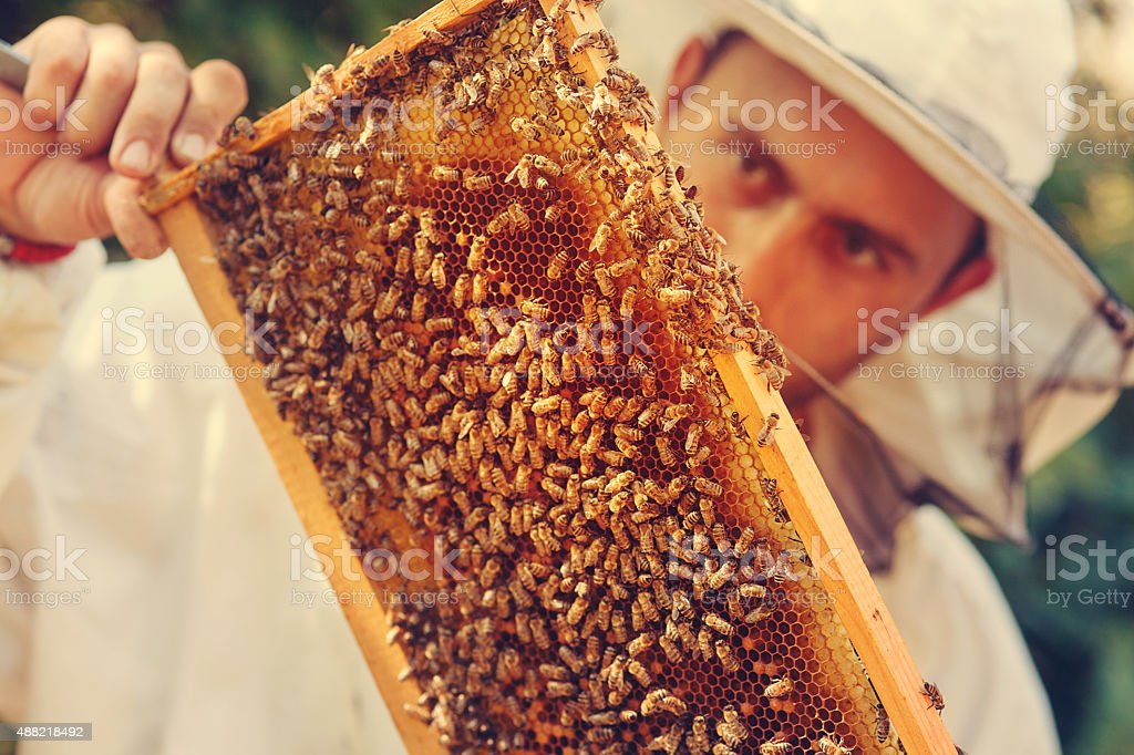 Beekeeper collecting honey selective focus on a honeycomb and be stock photo