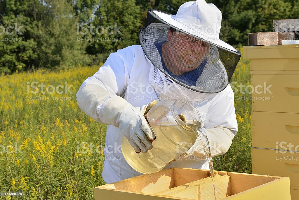 Beekeeper Feeding Sugar Water to Hive royalty-free stock photo