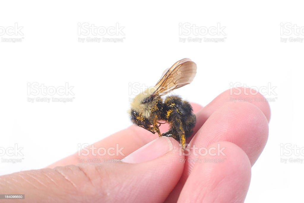 Beekeeper Hand stock photo