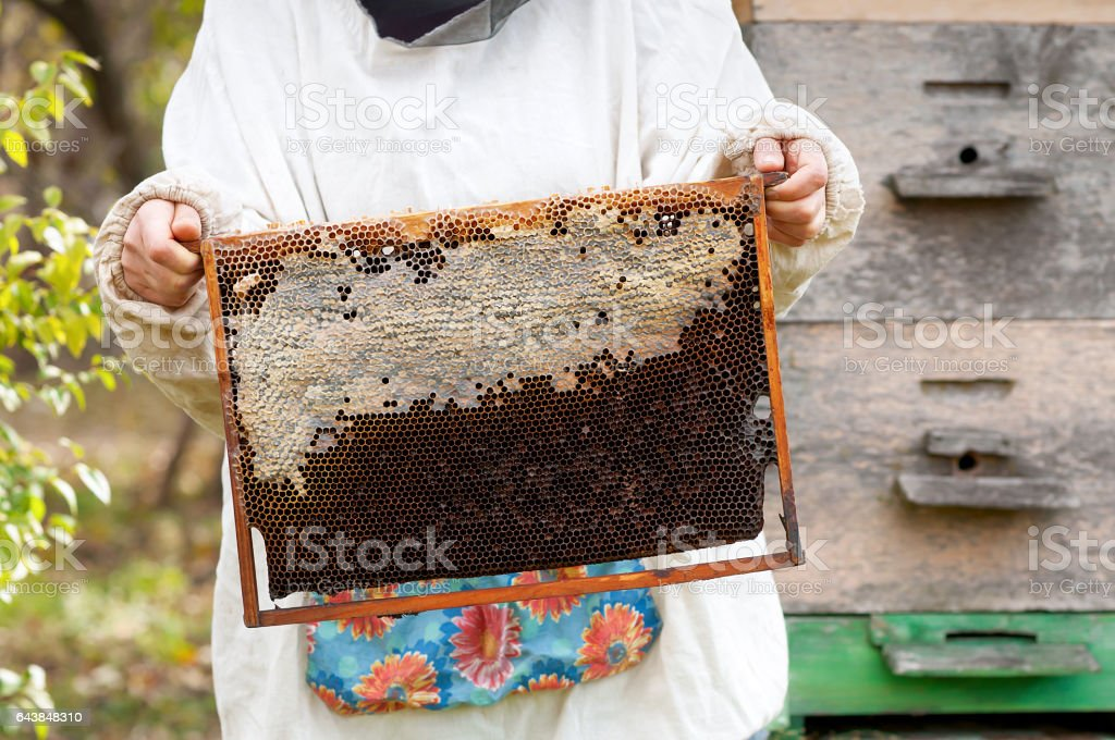 Beekeeper holding frame of honeycomb. stock photo