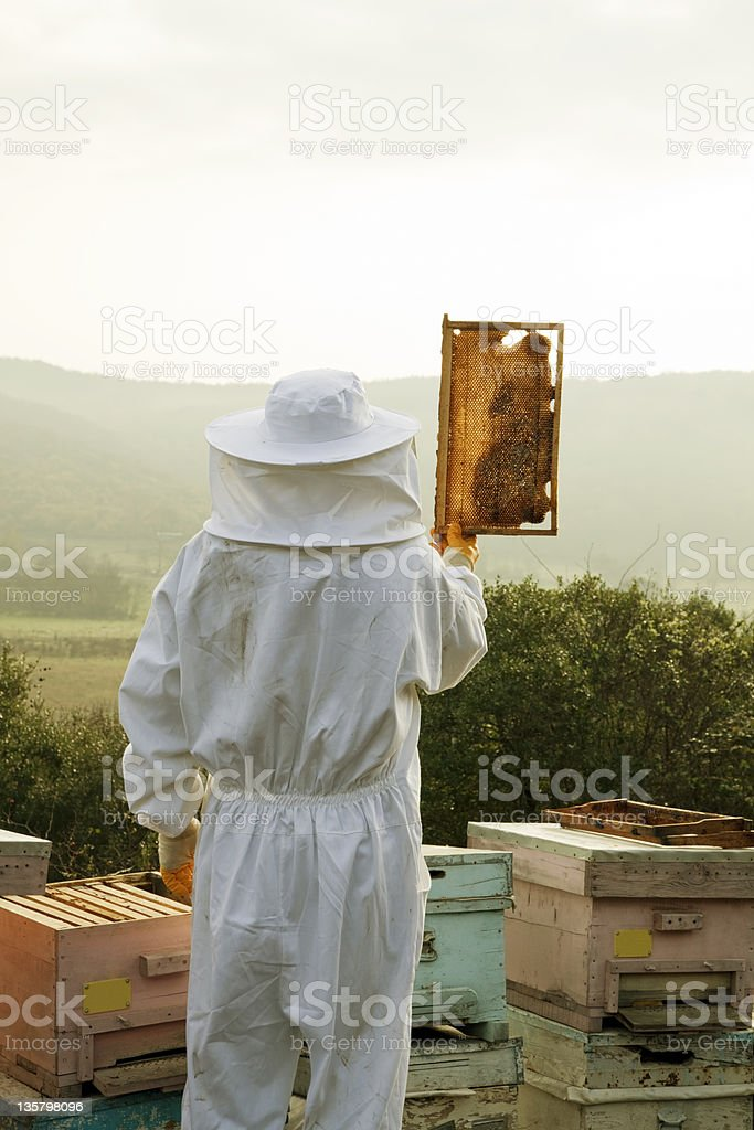 Beekeeper Holds Honeycomb royalty-free stock photo