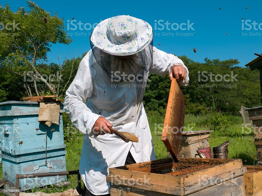A beekeeper in uniform at work stock photo