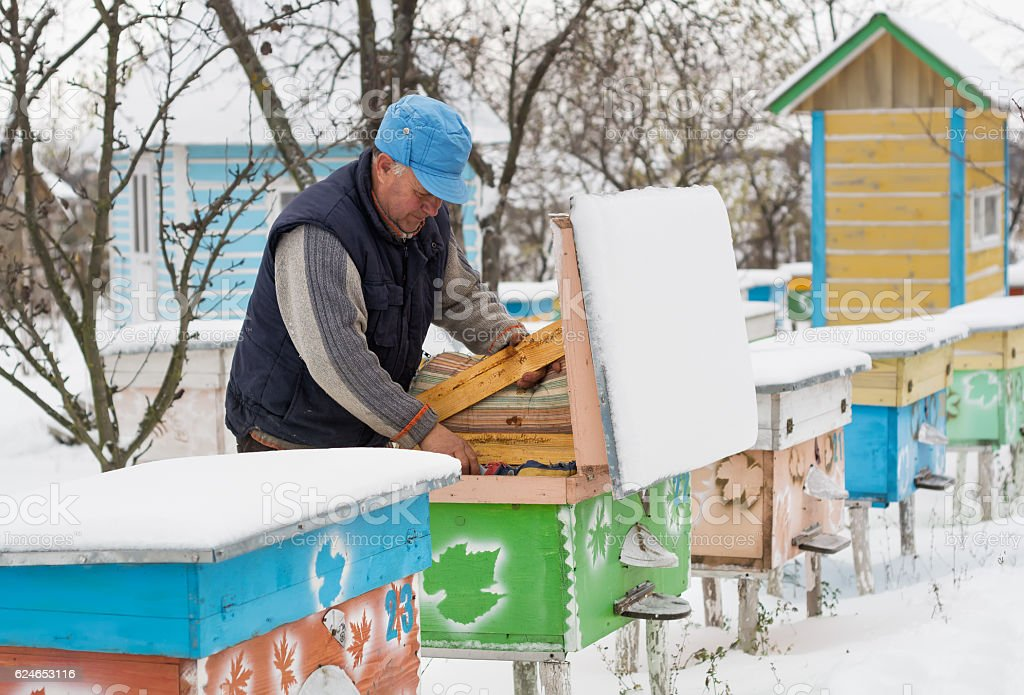 Beekeeper insulation hives with bees in winter stock photo