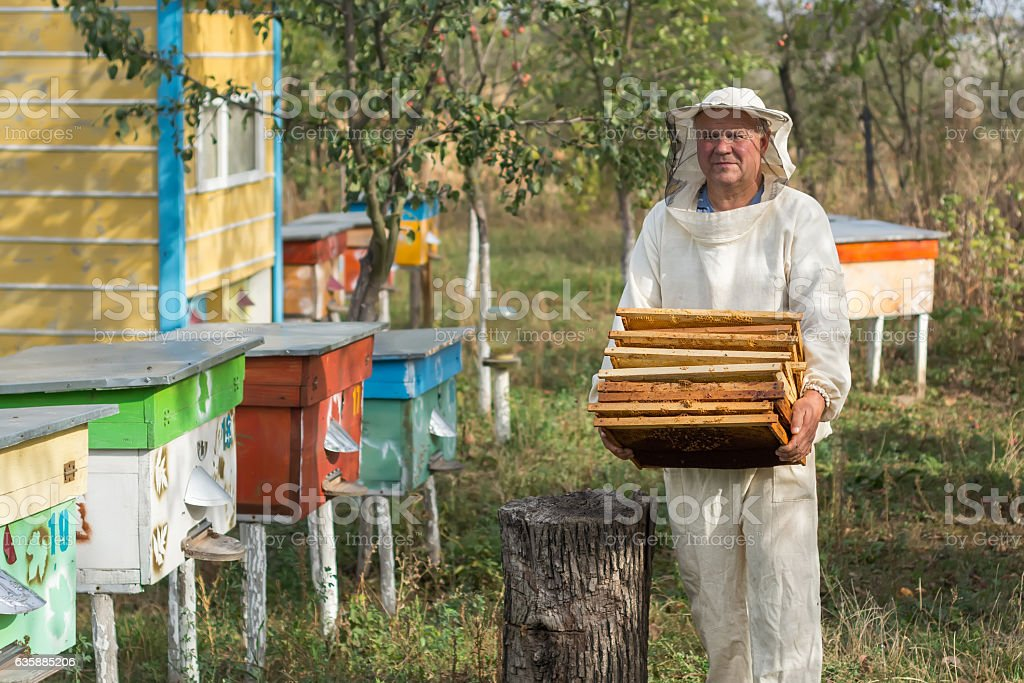 Beekeeper is working with bees and beehives on the apiary. stock photo