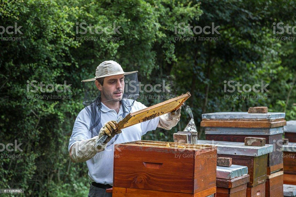 Beekeeper making honey stock photo