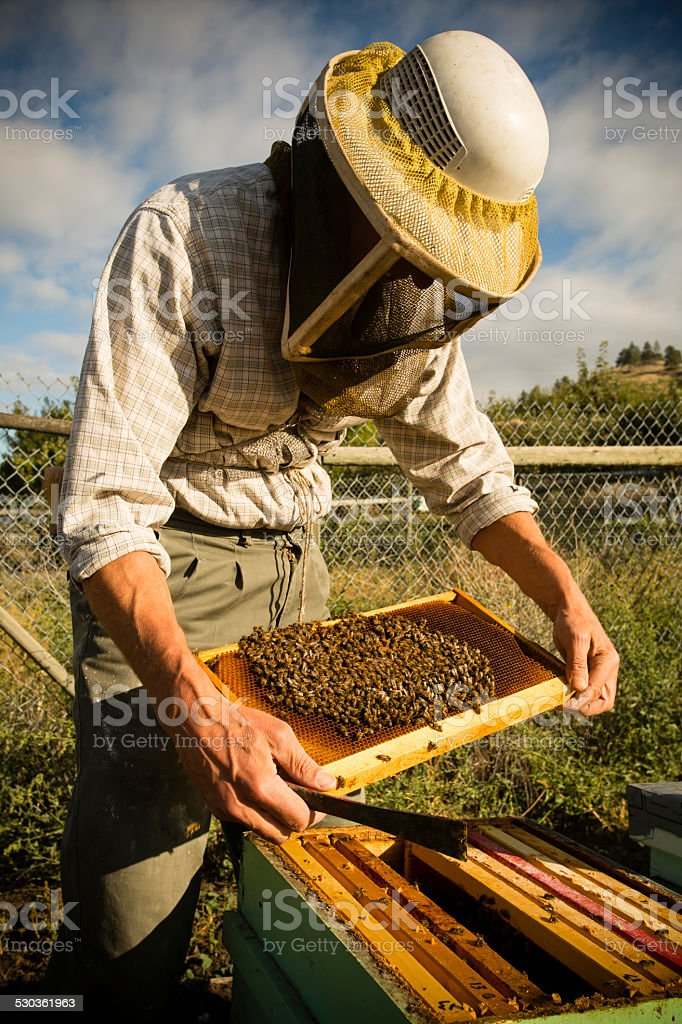 Beekeeper Okanagan Valley stock photo