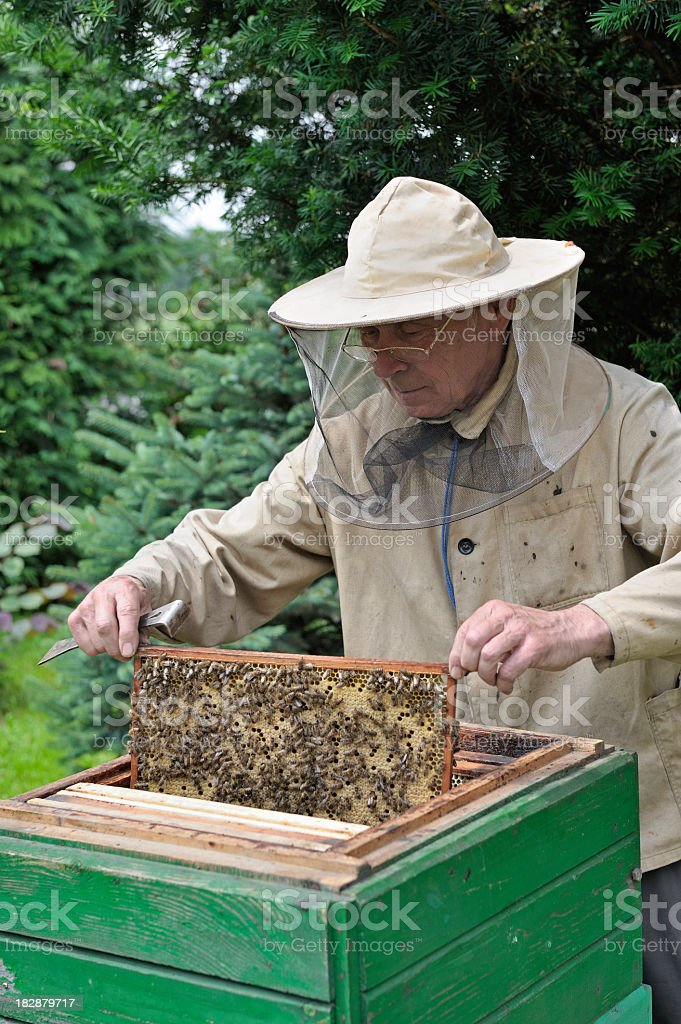 Beekeeper stock photo