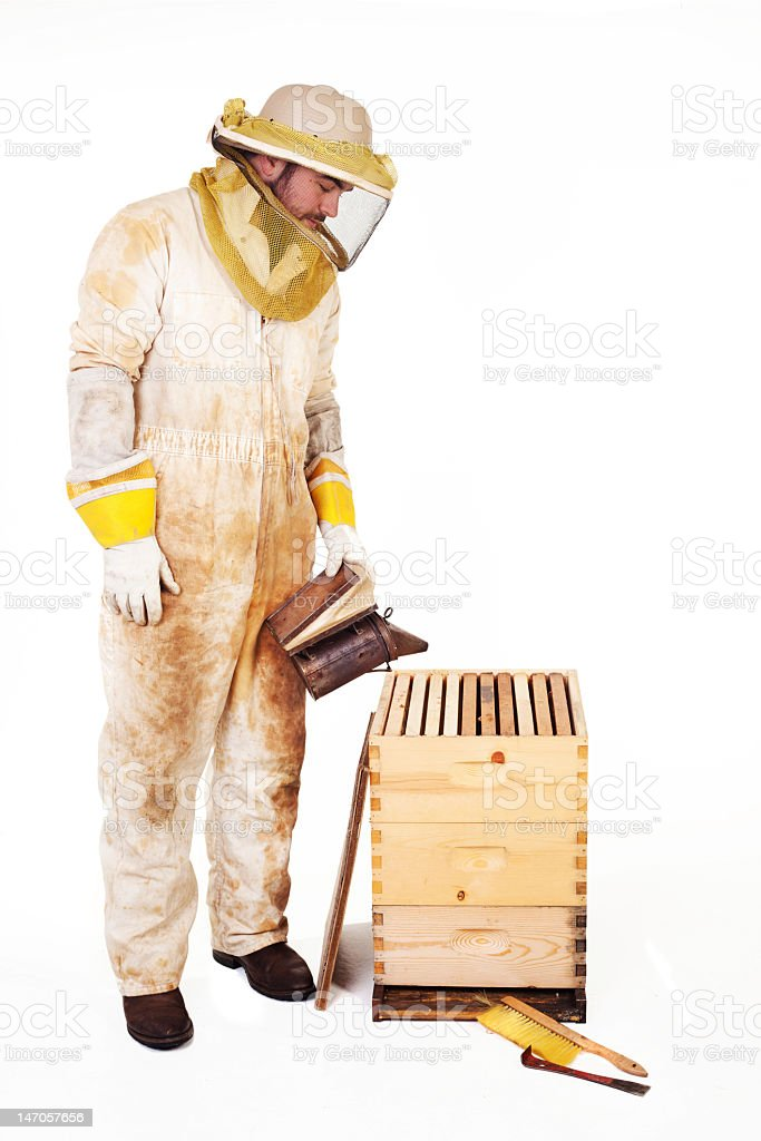 Beekeeper Smoking A Hive royalty-free stock photo