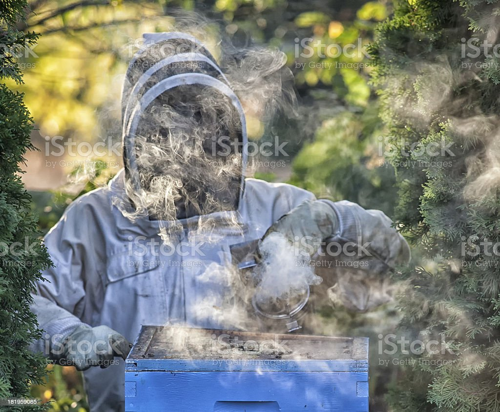 Beekeeper smoking a hive royalty-free stock photo