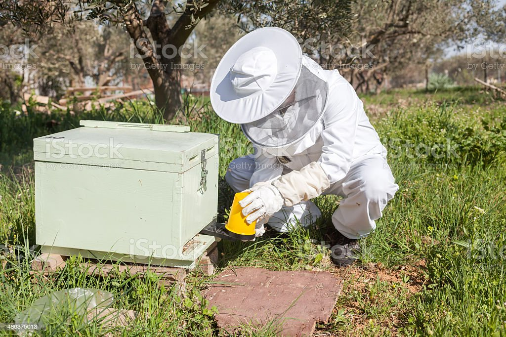 Beekeeper working in his apiary royalty-free stock photo