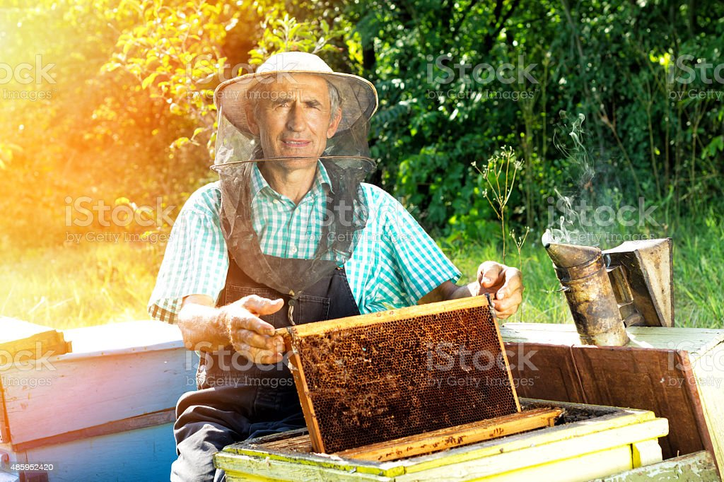 Beekeeper working stock photo