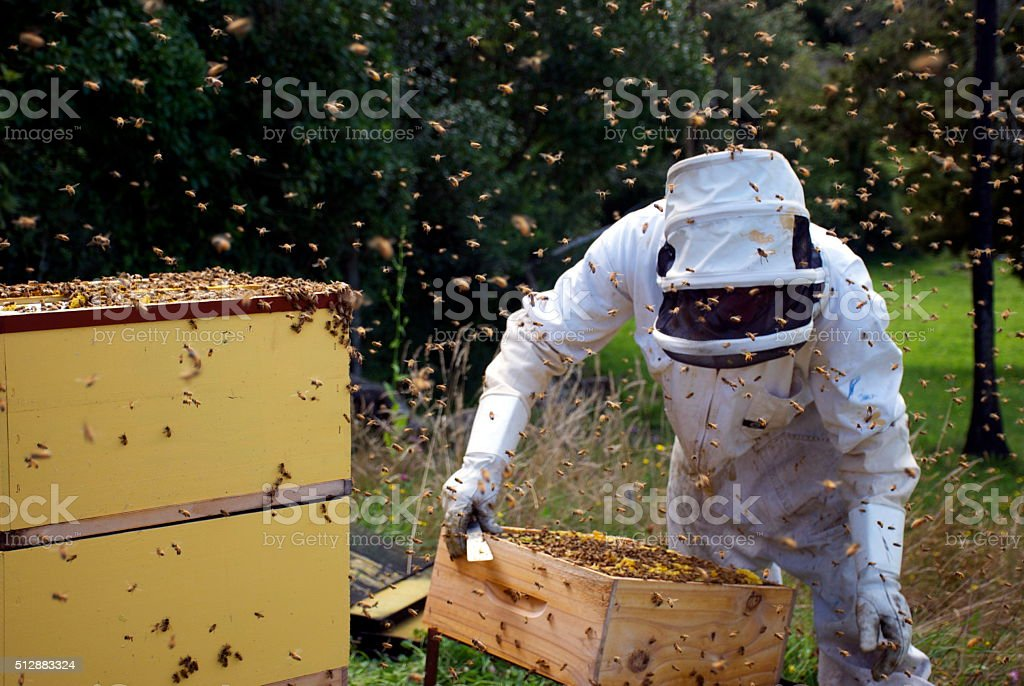 Beekeeper working with Hives stock photo