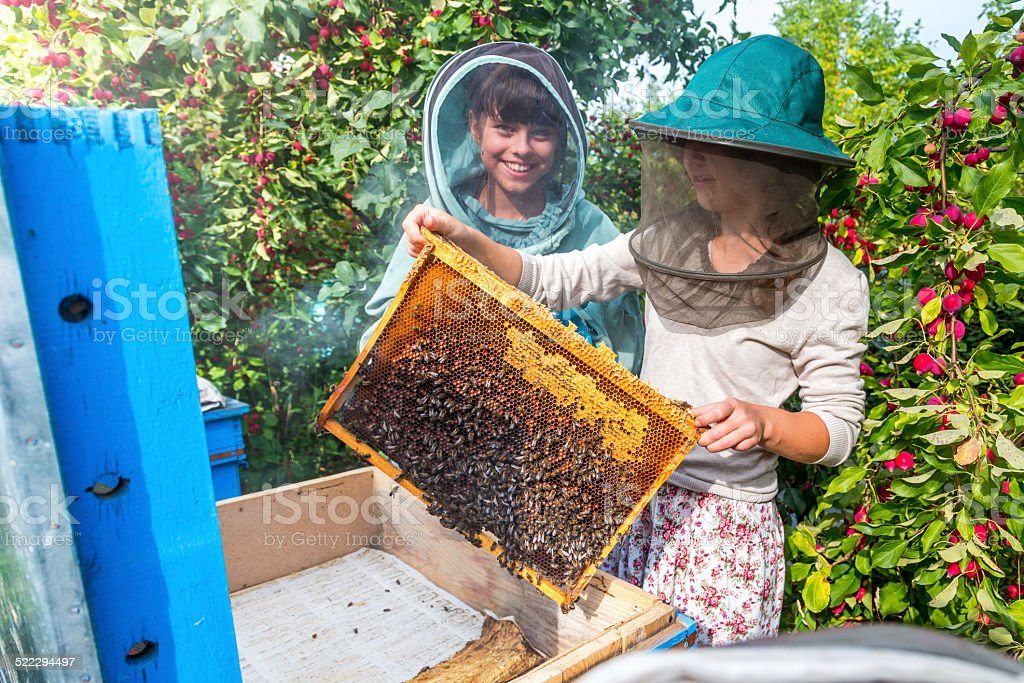 Beekeepers keeping bees stock photo