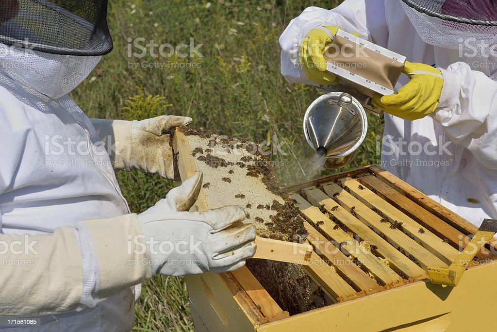 Beekeepers Smoking Hive royalty-free stock photo