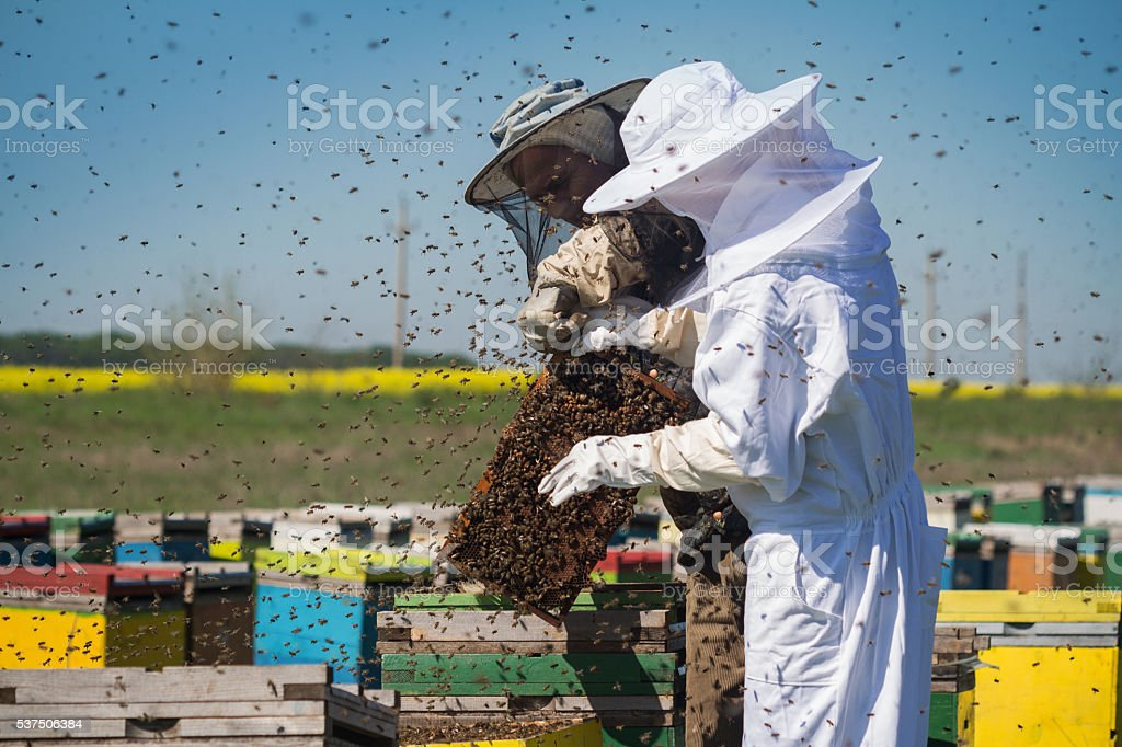 Beekeepers with bees swarming around them stock photo