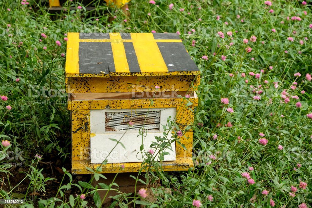 Beekeeping, agriculture, rural life. stock photo