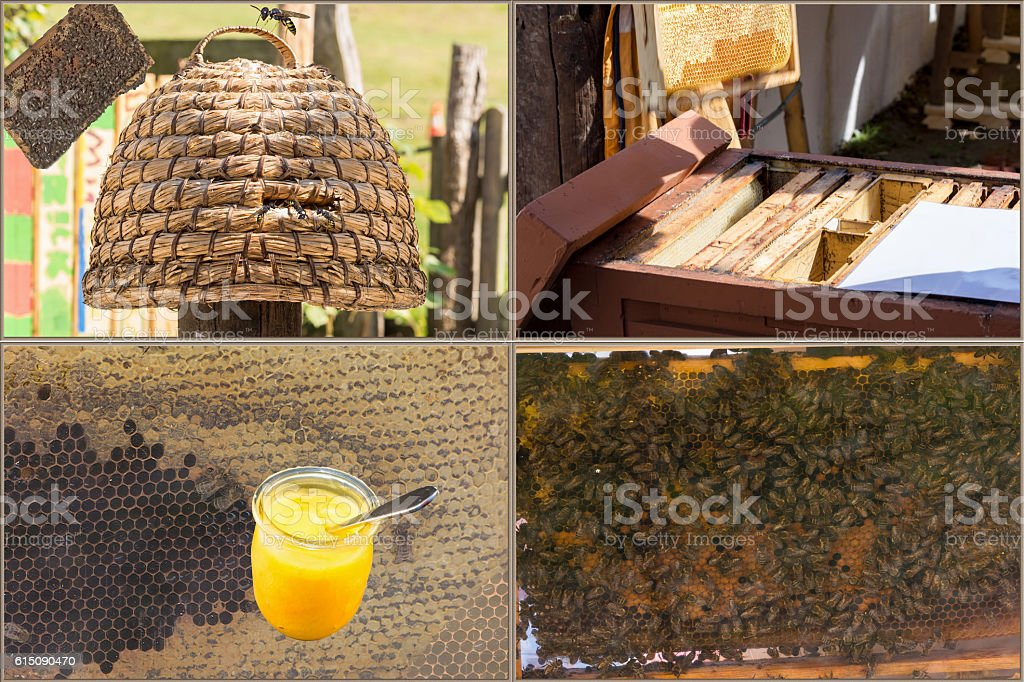 Beekeeping and honey production workflow stock photo
