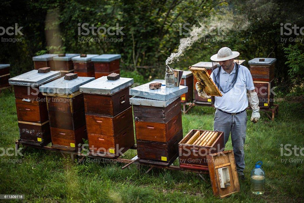 Beekeeping business stock photo