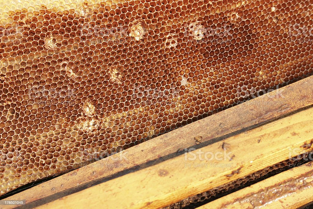 Beekeeping royalty-free stock photo