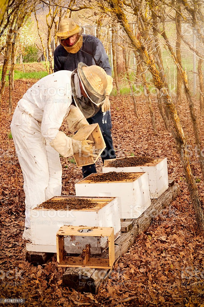 Beekeeping - Starting New Beehives In The Spring stock photo