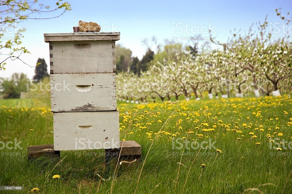 Beekeeping with Blooming Apple Trees in Background stock photo