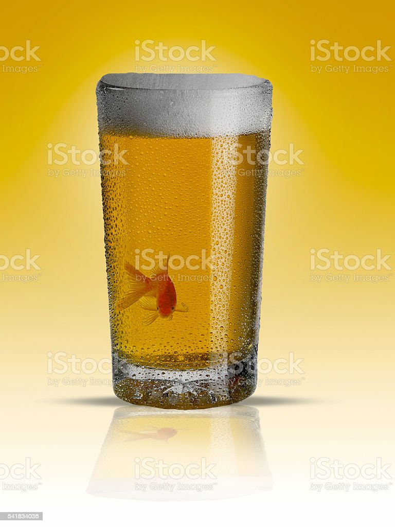 beer and fish stock photo
