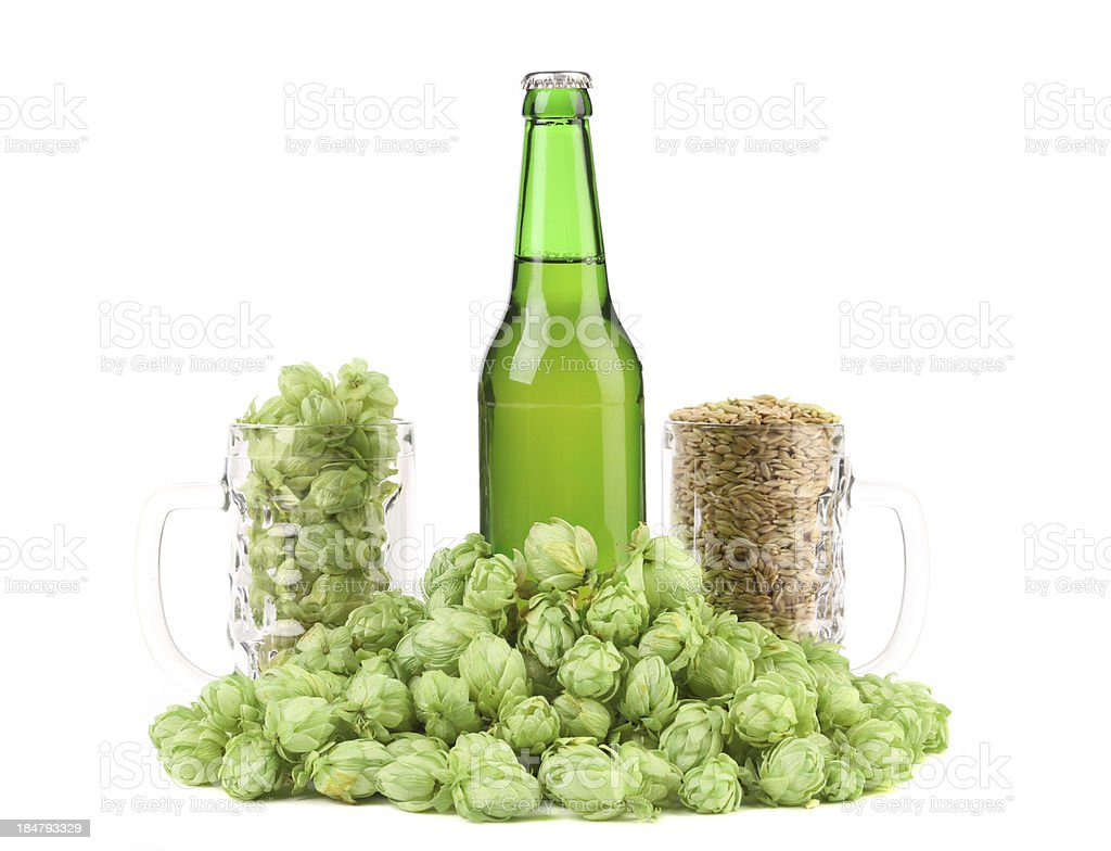 Beer botlle and green hop. royalty-free stock photo