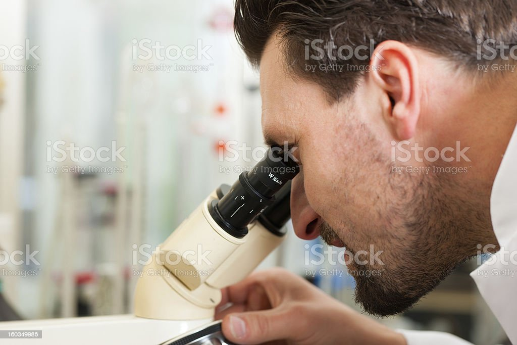 Beer Brewer in food laboratory examining royalty-free stock photo