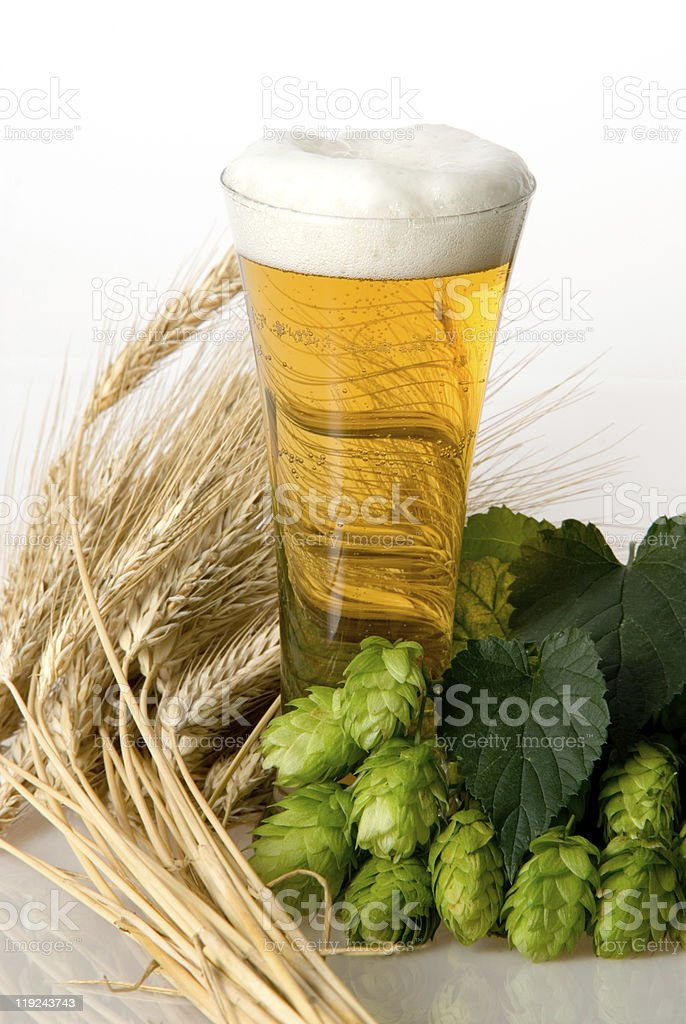 beer with hop cone stock photo
