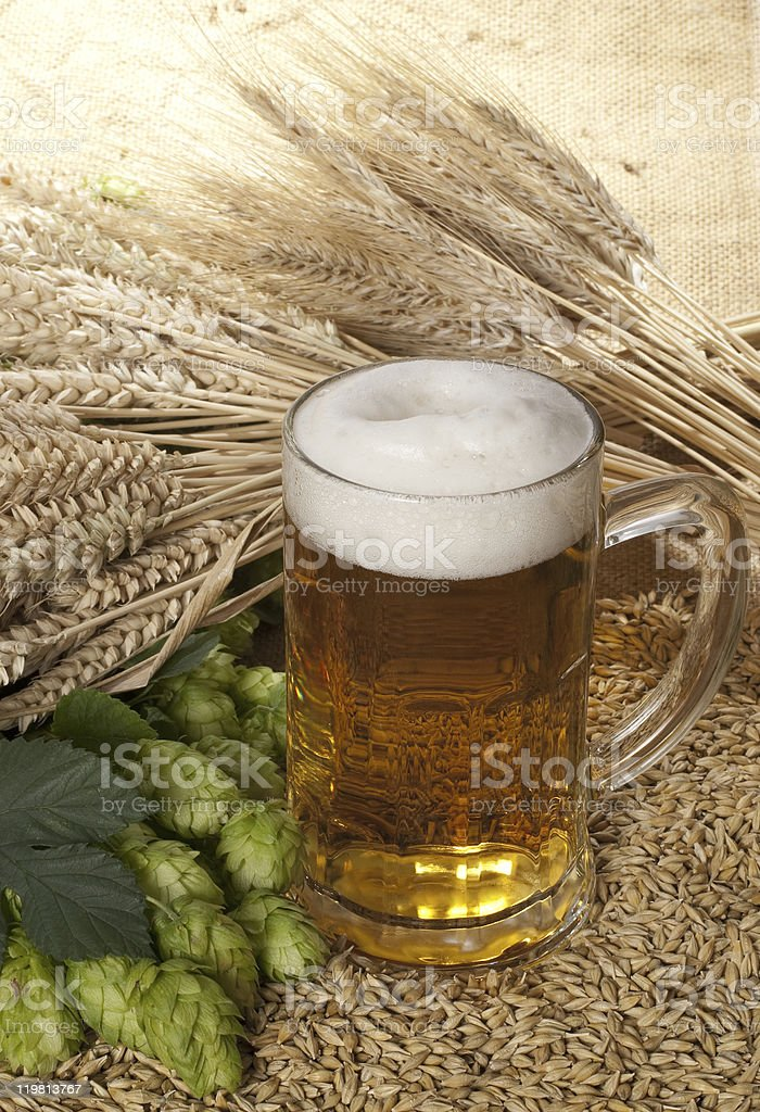beer with hopscone and barley royalty-free stock photo