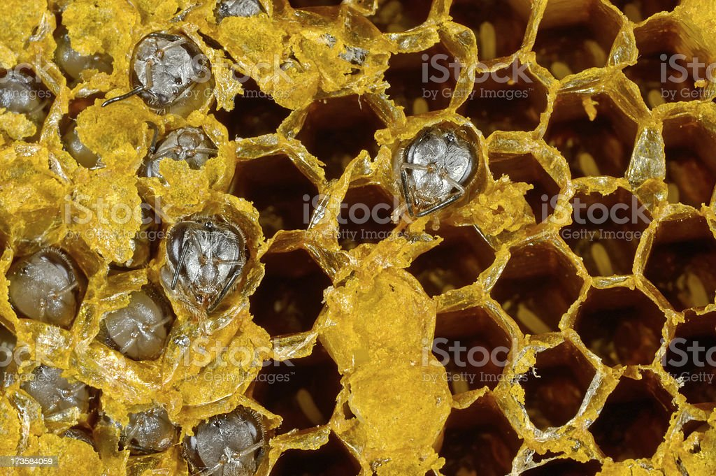 Bees and Beehive stock photo