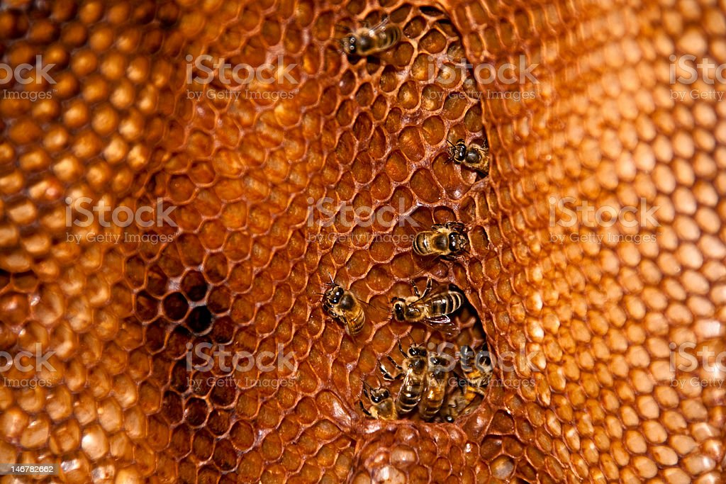 Bees and Honeycomb II royalty-free stock photo