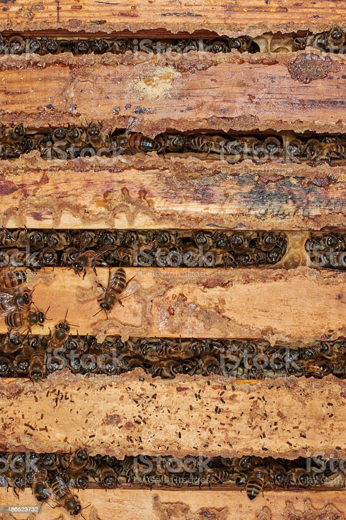 Bees between the honey frames stock photo