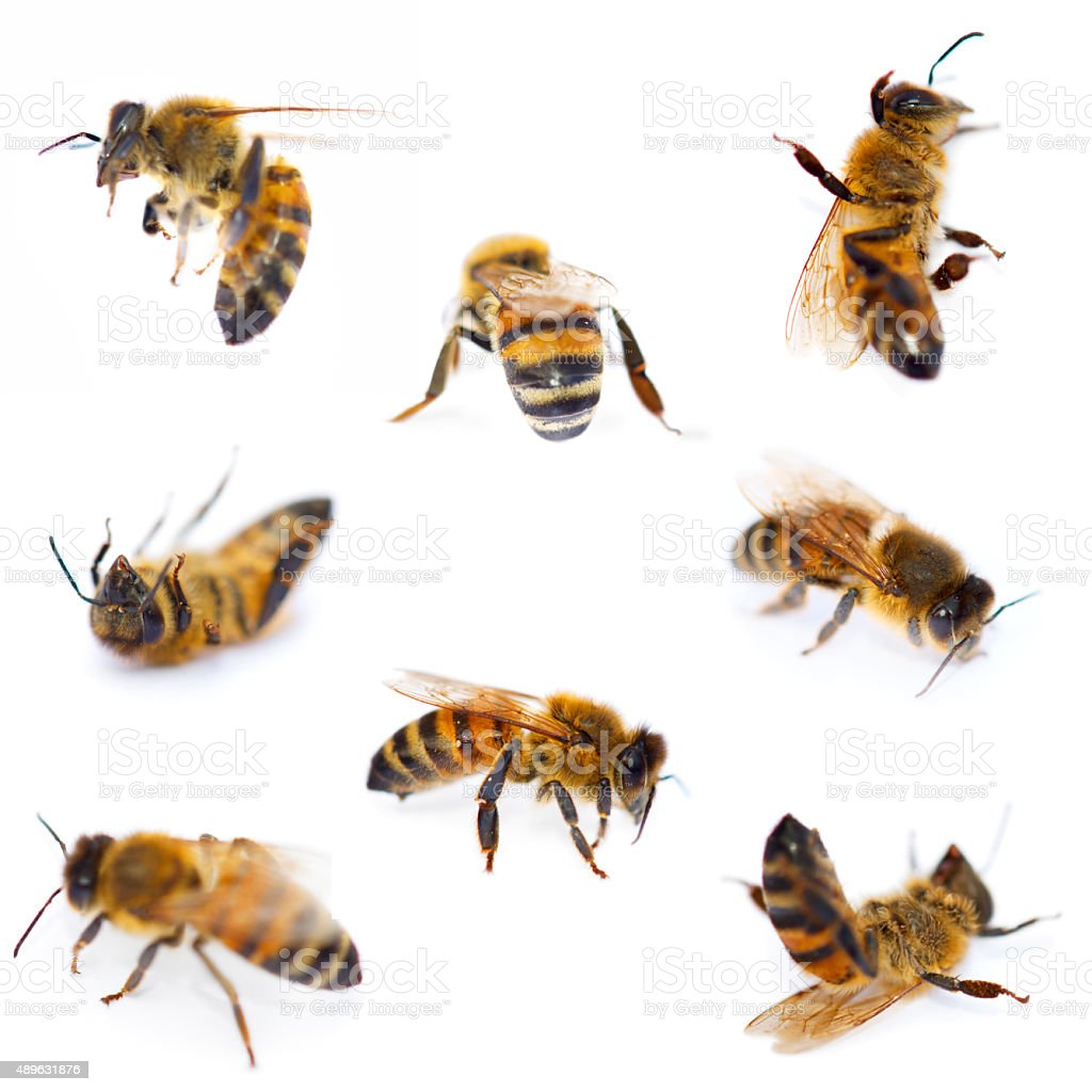 Bees Collection stock photo