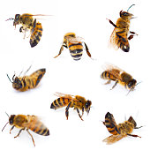 Bees Collection