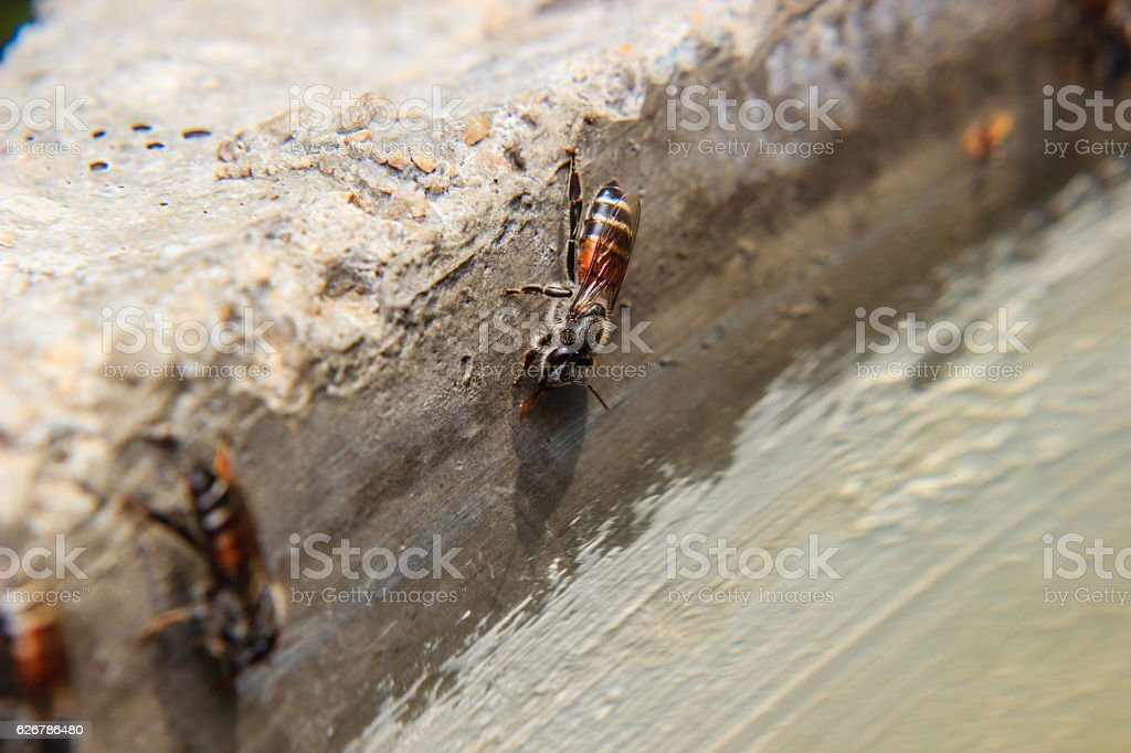 Bees drinking water stock photo
