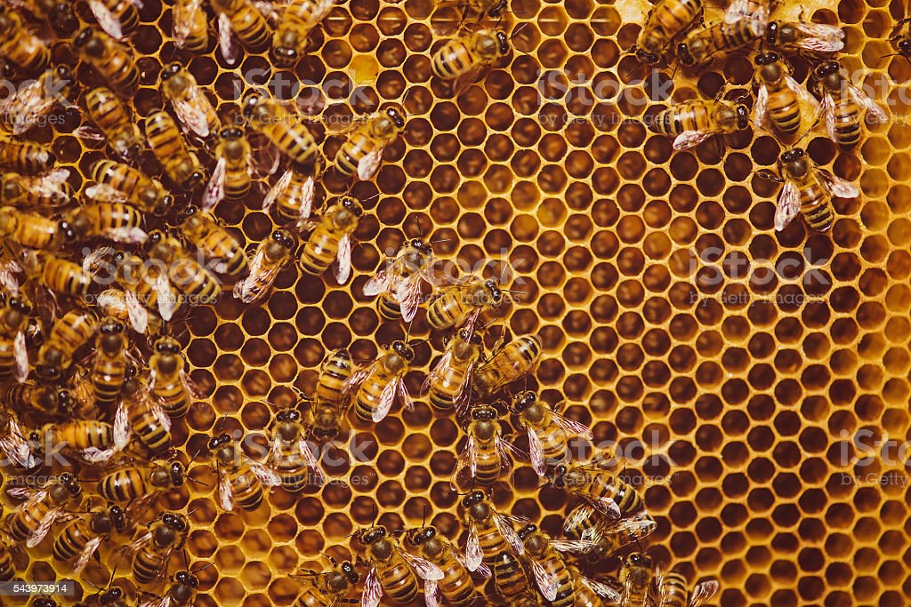 Bees feeding cells with honey honeycomb stock photo