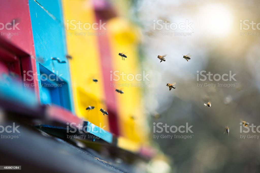 Bees Flying To The Hive stock photo