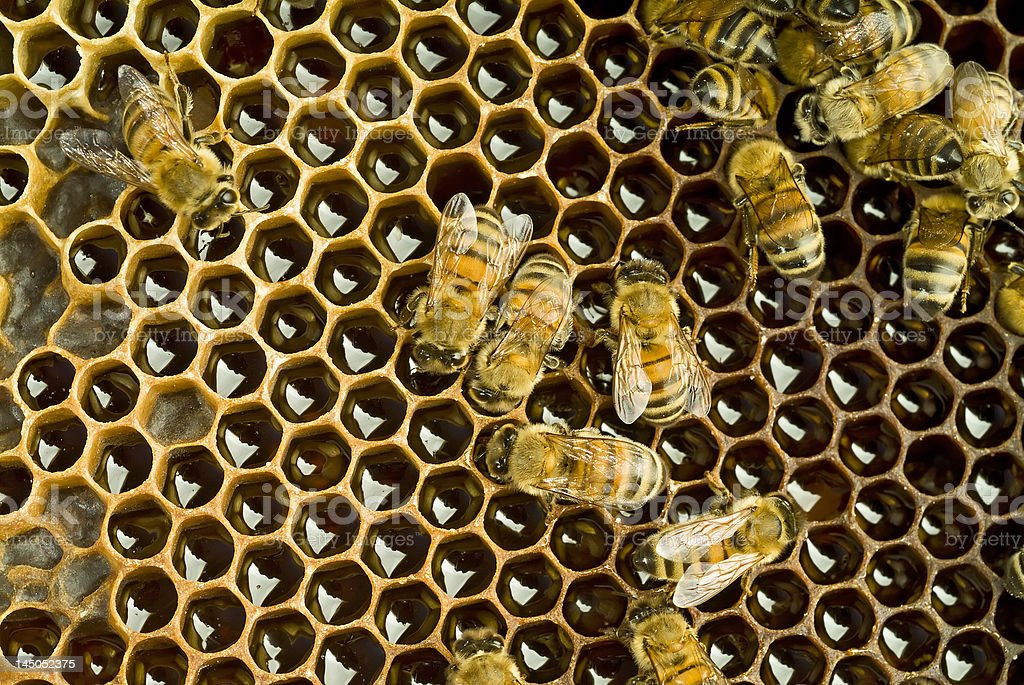 Bees inside  beehive royalty-free stock photo