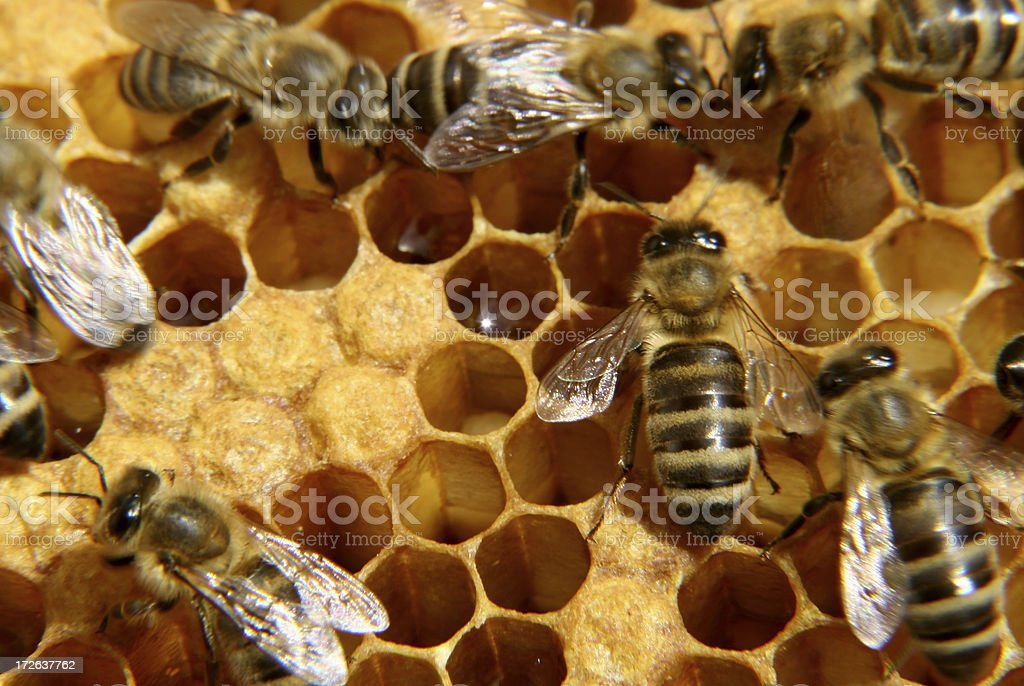 bees inside the hive royalty-free stock photo