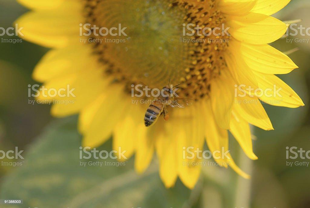 Bees Life stock photo