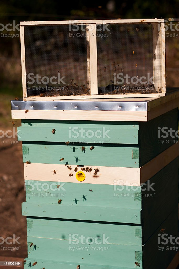 Bees - New Hive With Emptied Package royalty-free stock photo