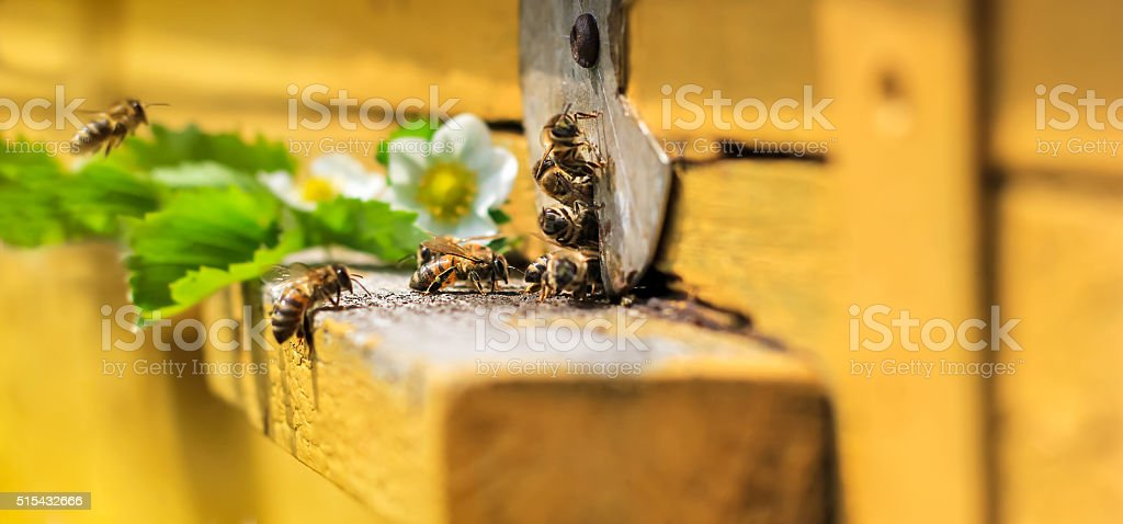 Bees on hive stock photo