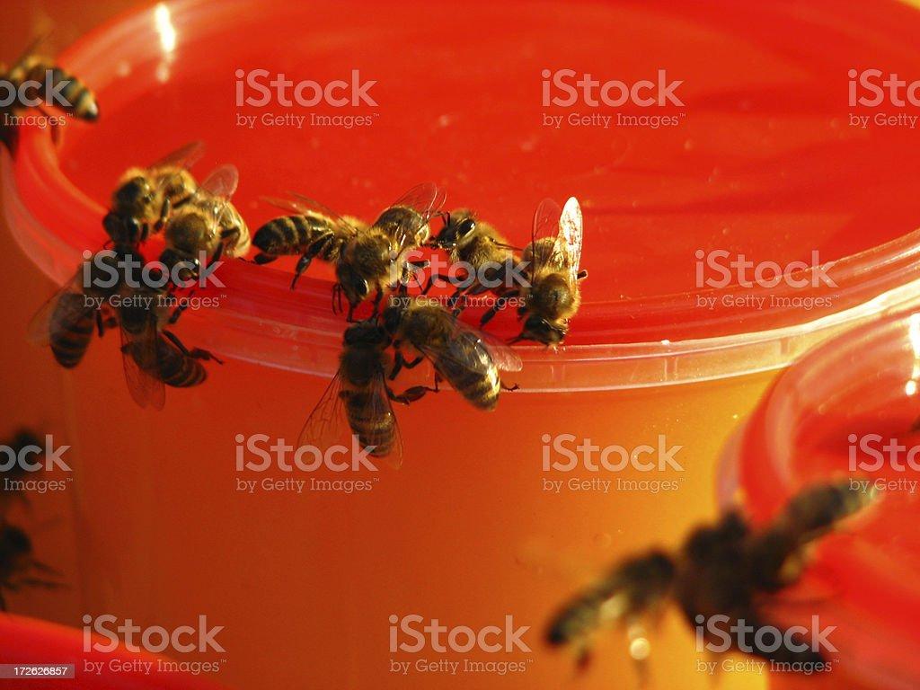 bees auf Honig Lizenzfreies stock-foto