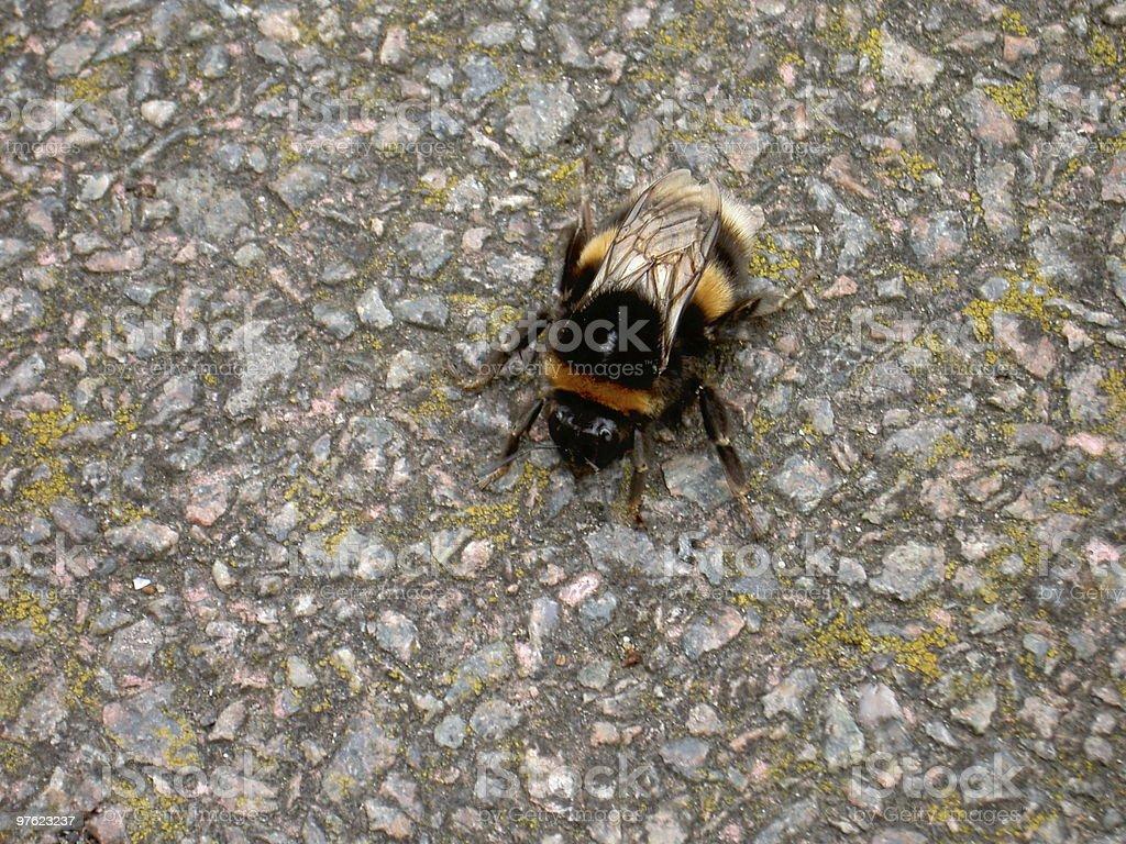 Bee's wings stock photo