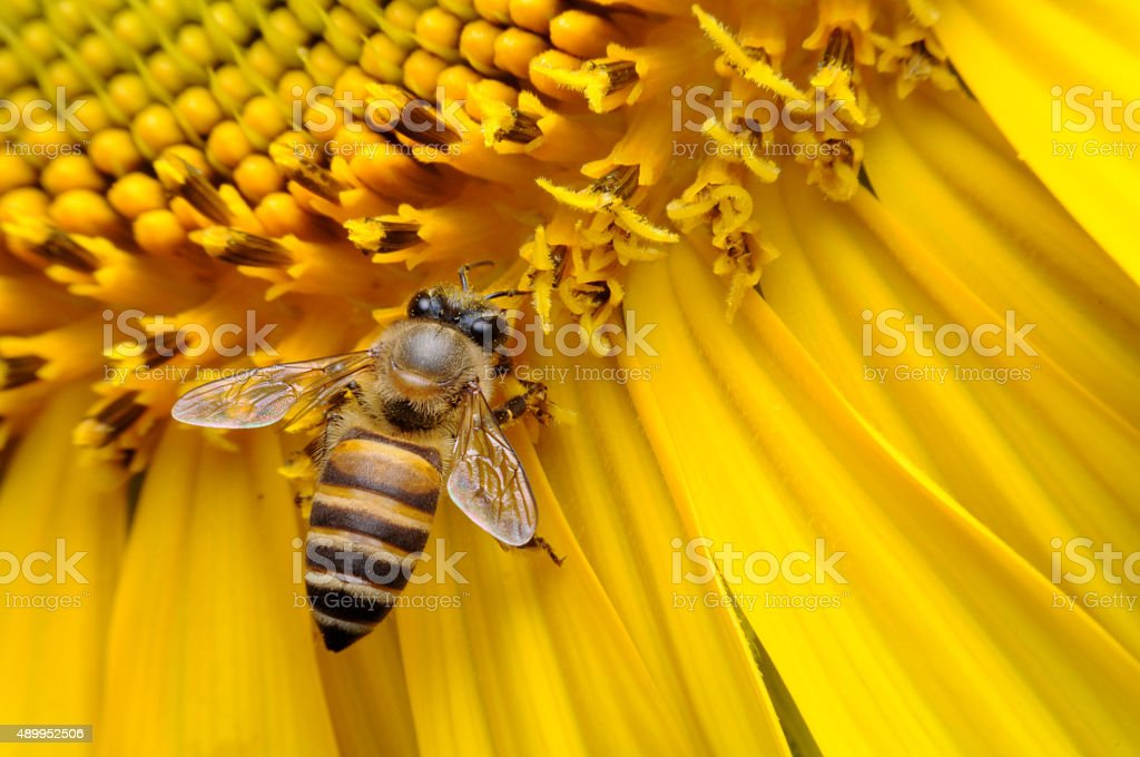 Bees with flowers. stock photo