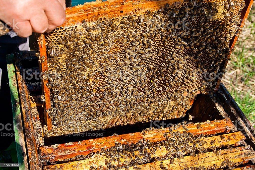 Bees trabaja en panal. foto de stock libre de derechos