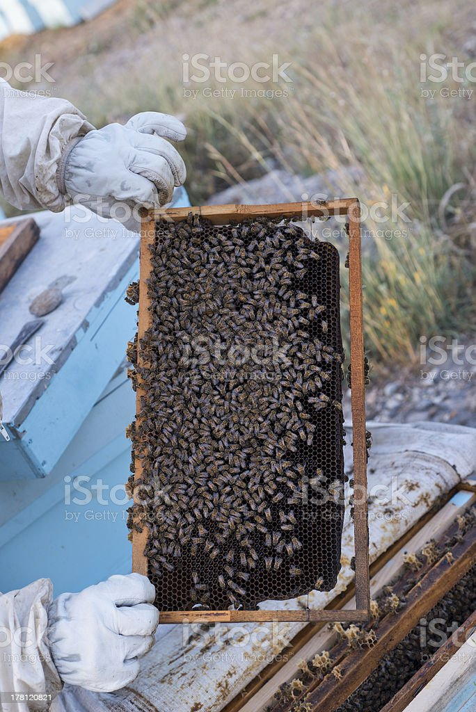 beeswax , apiary  and beekeeper royalty-free stock photo