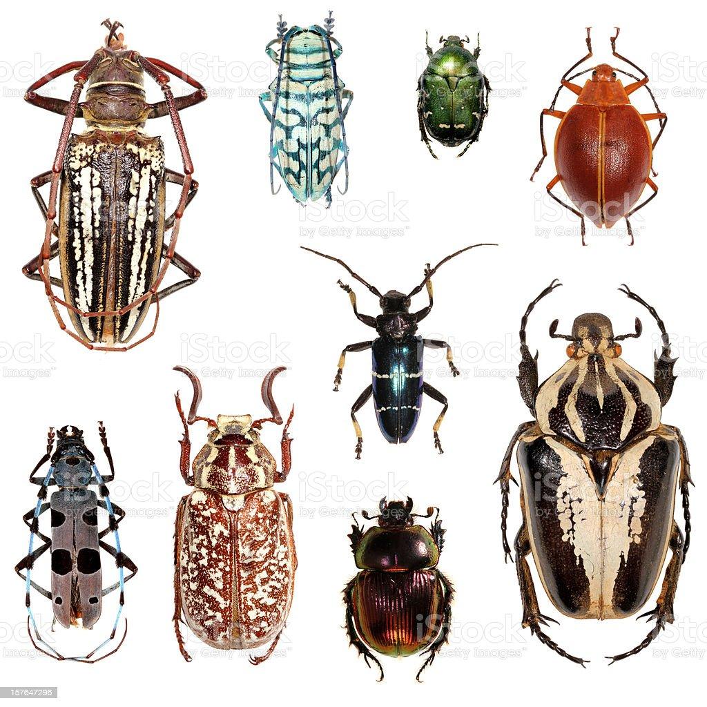Beetle collection XXXL stock photo