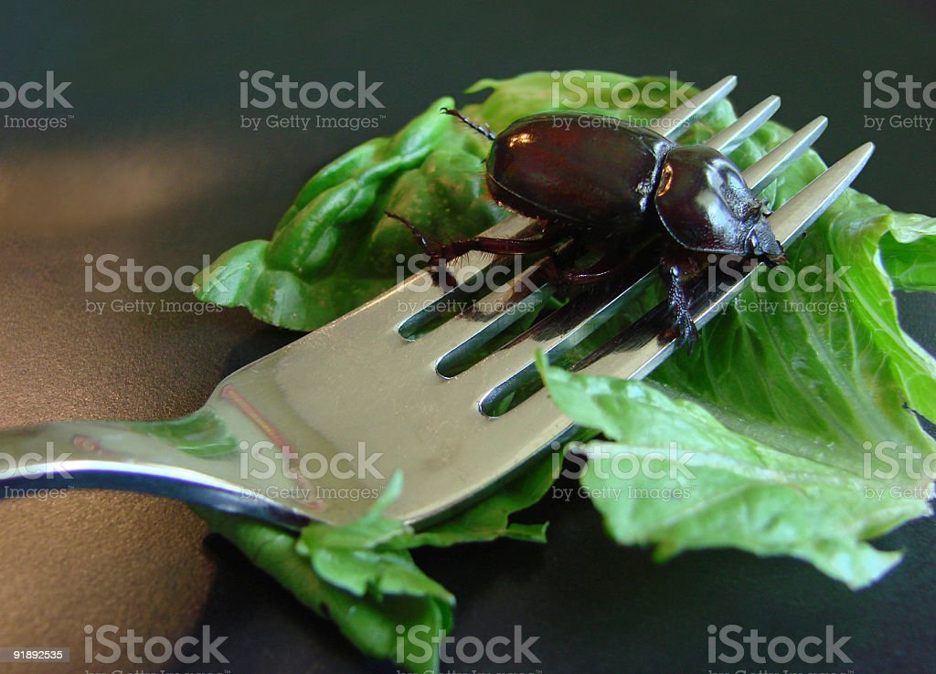 Beetle Dinner royalty-free stock photo